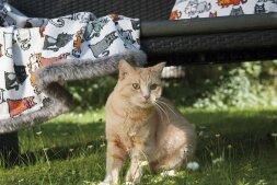 FEILER Полотенце CATS